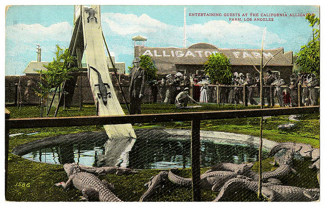 Entertaining guests at the California alligator farm, Los Angeles, by The California Historical Society